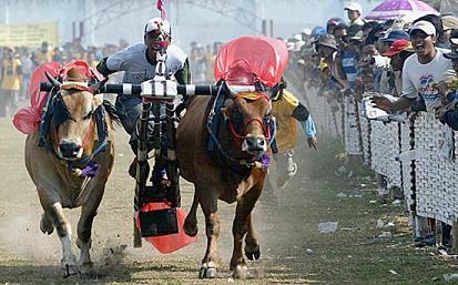La corsa dei tori