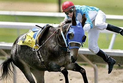 La corsa dei muli