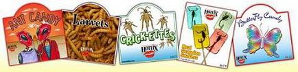 Dolci con insetti