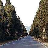 I cipressi di Bolgheri