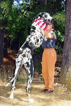 Il cane più alto del mondo