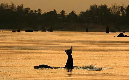 Delfino altramonto