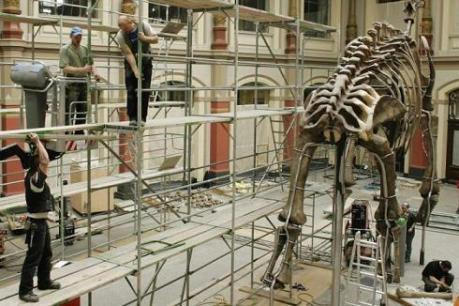 Lo scheletro di dinosauro piùgrande