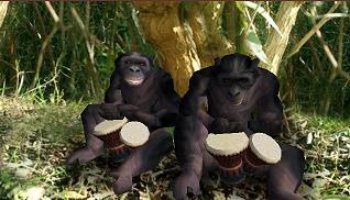 Bonobo'sBongos
