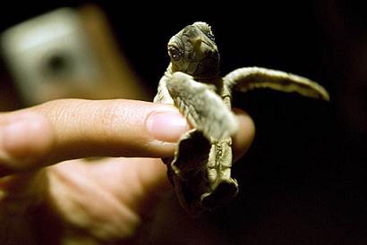 La piccolatartaruga